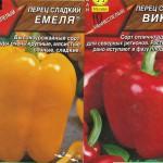 Выращивание перца в открытом грунте на Южном Урале. Выращивание рассады перца.